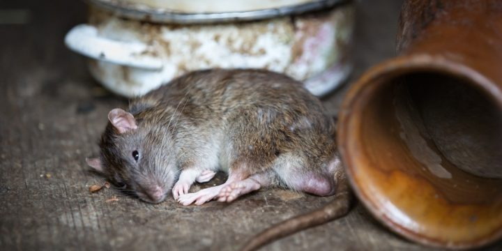 Top Bar Pests You Should Know About